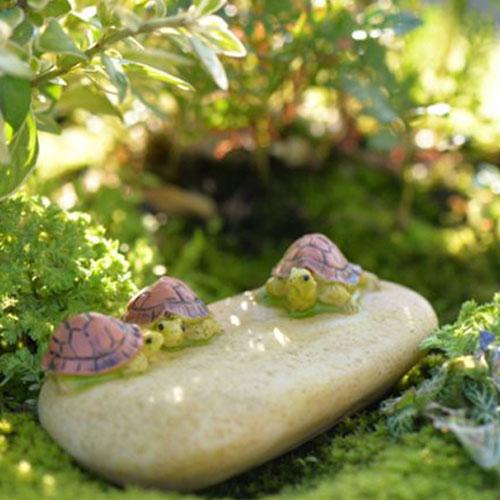 Rùa con trên tản đá