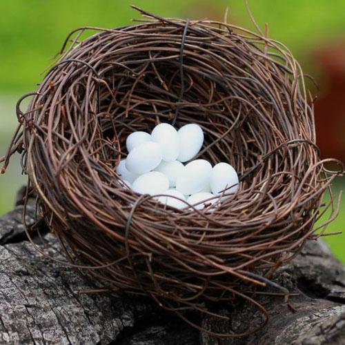 Tổ trứng chim
