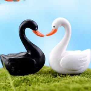 Cặp vịt trắng đen